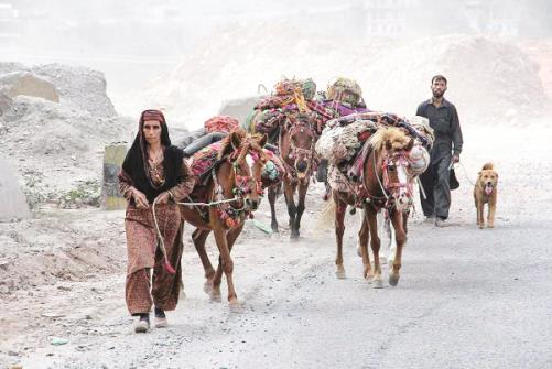 Members from Gujjar tribe lead a herd of horses along the Jammu-Srinagar highway at Ramban.