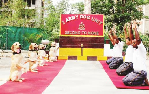 Army Dog Unit performs yoga on International Day of Yoga on Friday. (ANI Photo)